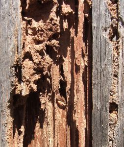 Va Loan Rules What About Termite Inspections